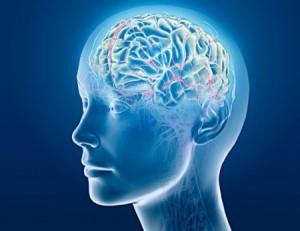 Les démences de type Alzheimer entraînent des troubles cognitifs